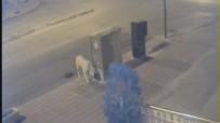 RAUF DENKTAŞ - Karaman'da Esnafı Önce Kızdıran Sonrasında İse Güldüren Köpek