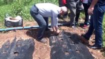 ORGANİK ÜRÜN - Muş'ta 200 Ton Çilek Üretimi Bekleniyor