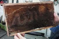 Arılar Petek Üzerine 'Allah' Yazdı