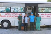 SOKAK HAYVANI - Çardak Beldesinde Sokak Hayvanları Kısırlaştırılıyor