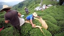 BÜYÜKKÖY - Çay Üreticisinin Yüzü Fiyat Artışıyla Güldü