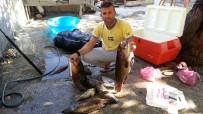 NARLıCA - Hatay'da Asi Nehrine Giren Dalgıç Boğularak Can Verdi