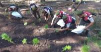 Jandarmadan Ormanda Uyuşturucu Operasyonu