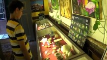 KÖPEK BALIĞI - Köpek Balığı Yumurtası Ve Meteor Taşı Bu Müzede