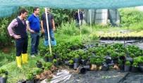 KIRAZLı - Yalova'da Hasar Tespit Çalışmaları Başladı