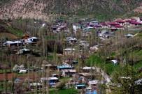 KURBAĞA - Nesli Tükenmekte Olan Semenderler Köylünün İçme Suyundan Çıktı