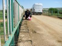 YENİ KÖPRÜ - Vatandaşlardan Çürük Köprünün Yenilenmesi Talebi