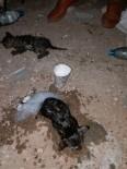 NEVŞEHİR BELEDİYESİ - Yangında Mahsur Kalan Kedileri İtfaiye Ekipleri Kurtardı
