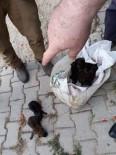 Balıkesir'de Bulunan Kurt Yavruları  Bursa'da Koruma Altına Alındı.
