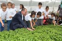 YERLİ TOHUM - Başkan Duruay Öğrencilere Organik Sebze Fidesi Dağıttı