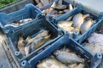 Elazığ'da Kaçak Avlanan 300 Kilo Balık Ele Geçirildi