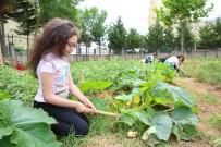 HOBİ BAHÇESİ - Öğrenciler Organik Tarımla Toprakla Buluştu
