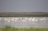 FLAMİNGO - Seyfe Gölü Yağışlarla Şenlendi