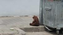 BOMBA İMHA UZMANI - Çöp Konteynerinin Yanına Bırakılan Oyuncak Ayı Paniğe Yol Açtı