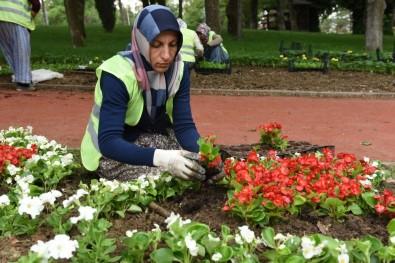 Çorum Belediyesi 600 Bin Çiçeği Toprakla Buluşacak