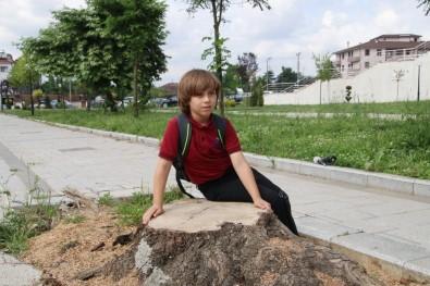 Kesilen Ağaca Ağlayan Minik Doruk Daha Çok Ağaç Dikilmesini İstiyor
