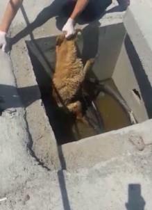 (Özel) TEM'de 'Bıçkın' Köpeği Kurtarma Operasyonu Kamerada