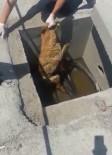 KEMERBURGAZ - (Özel) TEM'de 'Bıçkın' Köpeği Kurtarma Operasyonu Kamerada