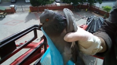 Siirt'te Güvercin Kurtarma Operasyonu