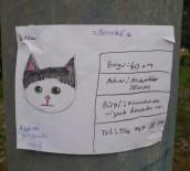 Sosyal Medya'da Fenomen Olan Kayıp Kedi 'Benekli' Bulundu.