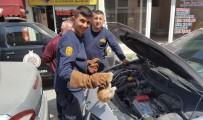 Otomobilin Motoruna Sıkışan Kediyi İtfaiye Kurtardı