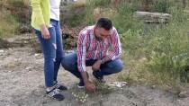 MEHMET UÇAR - Balıkesir'de Hıdırellez Heyecanı