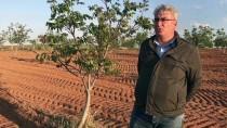 Ceviz Ağaçlarının Düşmanı 'Don Tabanlı Araziler'