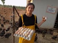 KLASIK MÜZIK - Mozart Ve Erik Dalı Dinleterek Tavuklarının Verimini Arttırdı