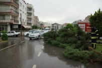 ÇAM AĞACI - Aydın'da Fırtına Ağaç Devirdi