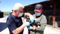 PSİKOLOJİK TEDAVİ - Hayvan Barınağında Sokak Hayvanlarına İtaat Eğitimi