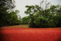 Longoz kızıla boyandı