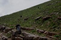 KATO DAĞı - Terörden Temizlenen Kato Dağı Ekmek Kapısı Oldu