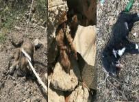 KÖPEK YAVRUSU - 3 Yavru Köpek Vahşice Öldürüldü