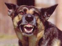 MANGO - Köpek faciası: 6 çocuk feci şekilde can verdi