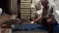 'Kanka' İsmini Verdiği Yavru Tilkiyi Her Gün Elleriyle Besliyor