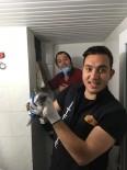 BATMAN BELEDIYESI - Yavru Kedi Havalandırma Boşluğunda Mahsur Kaldı