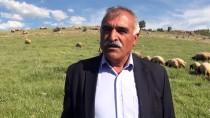 TARıM İŞLETMELERI GENEL MÜDÜRLÜĞÜ - '300 Koyun Projesi' Besiciye Can Suyu Oldu