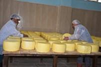 KATKI MADDESİ - Devlet Desteğiyle Kurulan Tesiste Günde 8 Ton Süt İşleniyor