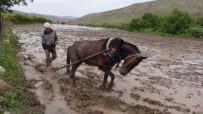 Gercüş'te Pirinç Üreticilerin Zorlu Mücadelesi Başladı