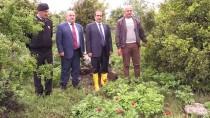 SALIM DEMIR - 'İtecik Lalesi'ni Koparmanın Cezası 48 Bin 600 Lira