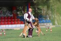 KORUYUCU HEKİMLİK - Kahraman Köpekler JAKEM'de Yetişiyor