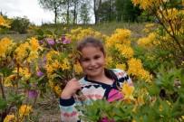 Karadeniz Yaylalarında Orman Gülleri Açtı
