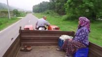 BOĞAZKÖY - Ovakorusu'ndaki Ayıların 15 Yıllık Bakıcısı