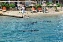 KANUNİ SULTAN SÜLEYMAN - Bodrum Koylarında Deniz Dibi Temizliği Sürüyor