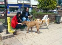 Fatsa Sokak Hayvanlarına Sahip Çıkıyor