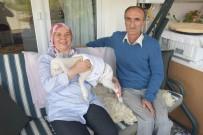 İSMAIL KARA - 'Garip' Adlı Kuzu Çocukları Gibi Oldu