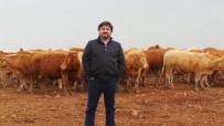 ET ÜRETİMİ - Hacıince Açıklaması 'Et Fiyatında İstikrar İçin İthalat Yerine, Yerli Üretime Destek Zorunludur'