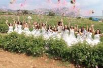 ISPARTA BELEDİYESİ - Isparta'da Gül Festivali Coşkusu