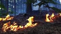 Havran'da Orman Yangını