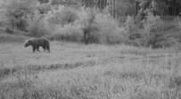 Kargı'da Yaban Hayvanlar 4 Mevsim Takip Edilecek